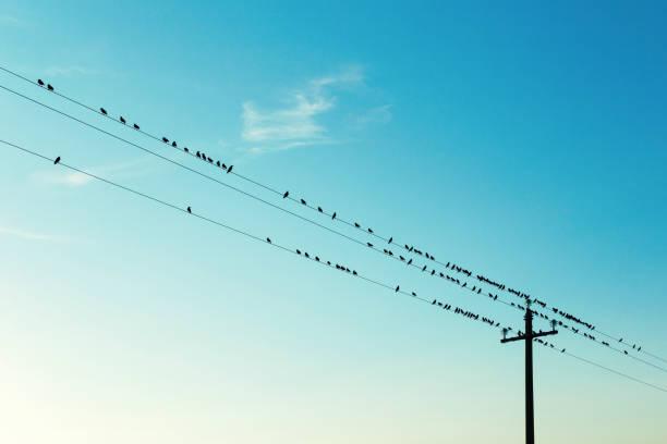 Flock of birds on electric cables clear sky picture id1045543050?b=1&k=6&m=1045543050&s=612x612&w=0&h= bxomdsbfzssqicgtuzvcjenvalrrtc6avfklqpvebw=
