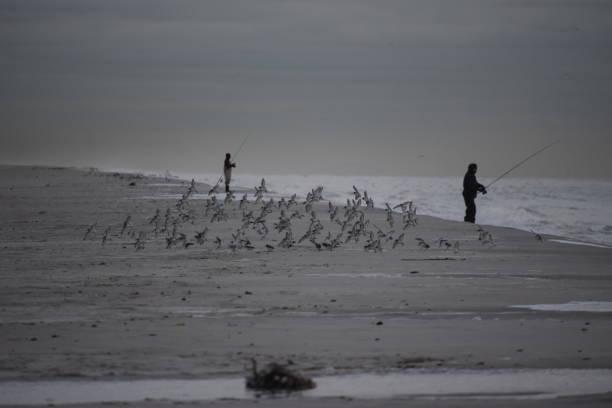Vogelschwarm – Foto