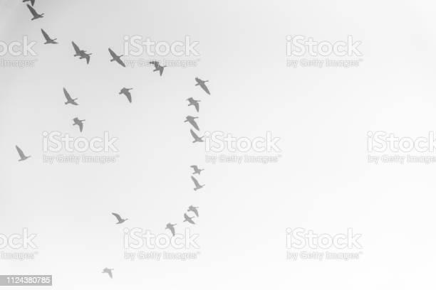 Flock of birds picture id1124380785?b=1&k=6&m=1124380785&s=612x612&h=xblqpdxn yzmellsvjr3esy4xqhm p08r2ddkyn0fkg=