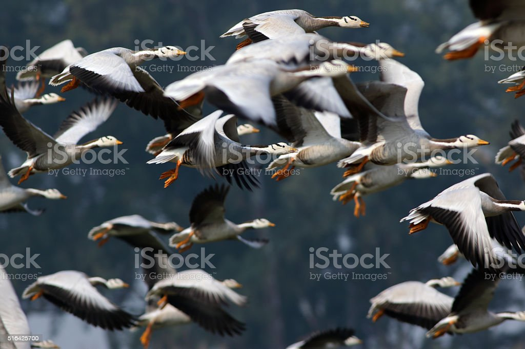 Flock of birds stock photo