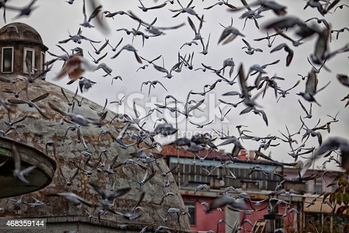 Flock Of Birds Pigeons Stock Photo Stock Photo & More Pictures of 2015