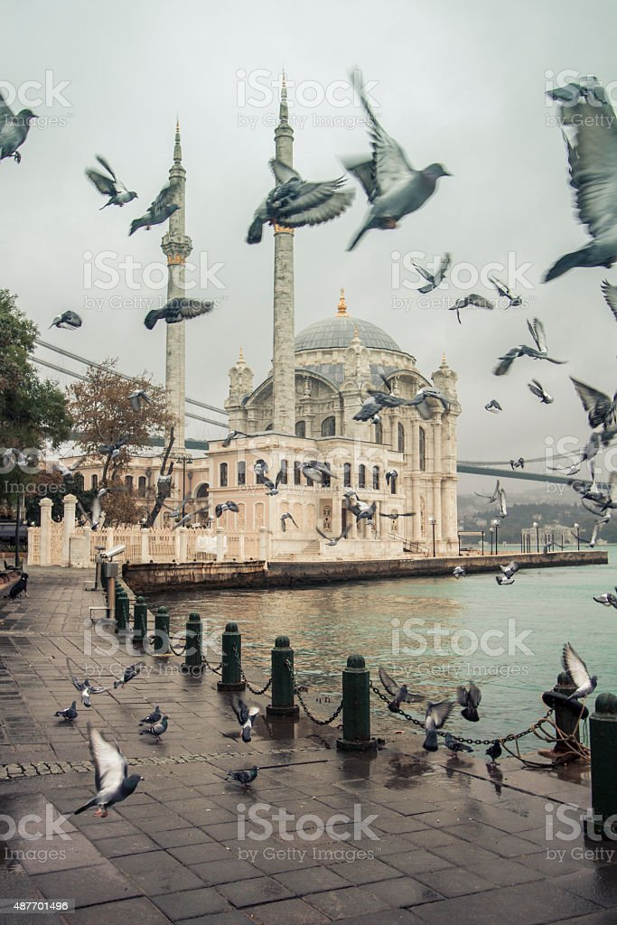 Flock of birds, quayside, Ortakoy stock photo