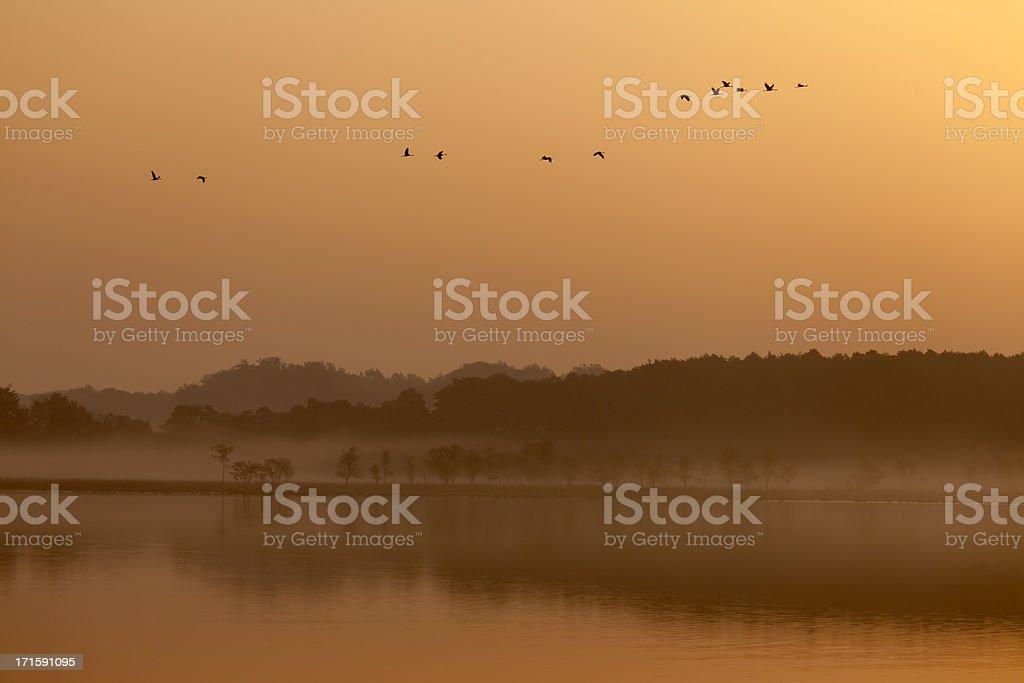 Flock of Common Cranes, Mueritz National Park, Germany royalty-free stock photo