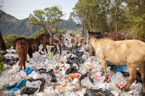 chiangmai thailand - january 9,2016 : flock of domestic horse feeding in plastic bag garbage field ,plastic garbage is big problem of environment disaster in thailand