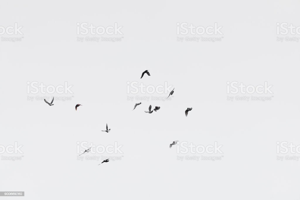 Flock of doves over white sky background stock photo