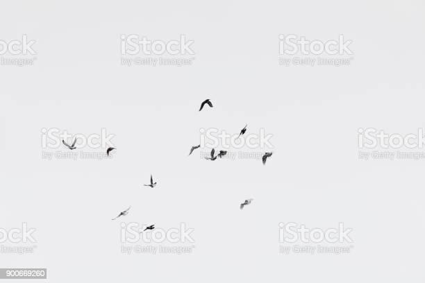 Photo of Flock of doves over white sky background