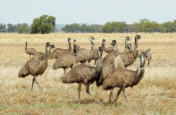 Emu Group