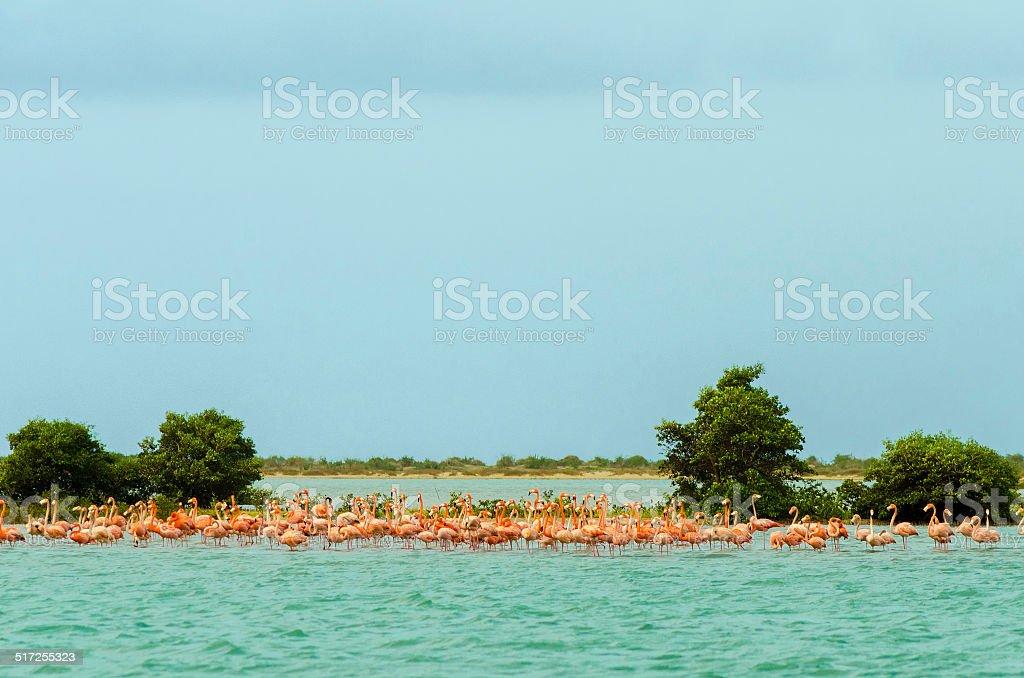 Flock of Flamingos stock photo