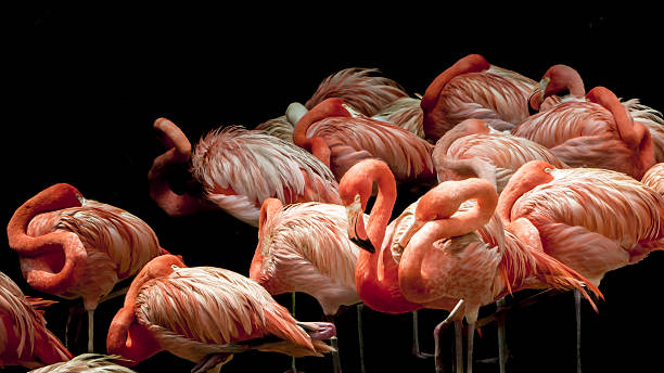 flock of flamingos sleeping - skulptur kunstwerk stock-fotos und bilder