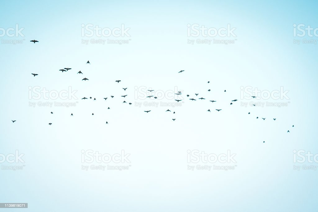 A flock of flying birds in the sky. Summer sky with clouds and flying...