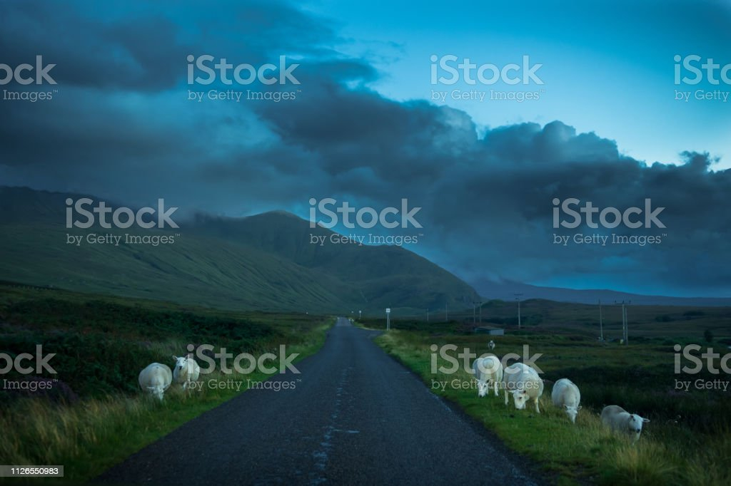 Flock Of Grazing Sheep And Lamb Beneath Lonesome Single Track Road Through Mountain Landscape Near Rhiconich In Scotland stock photo