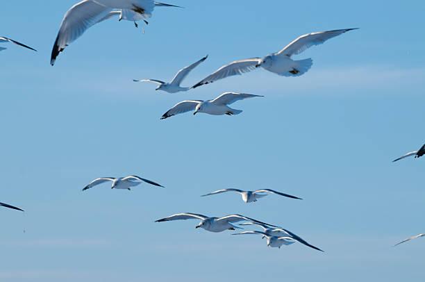 Flock of Gulls stock photo