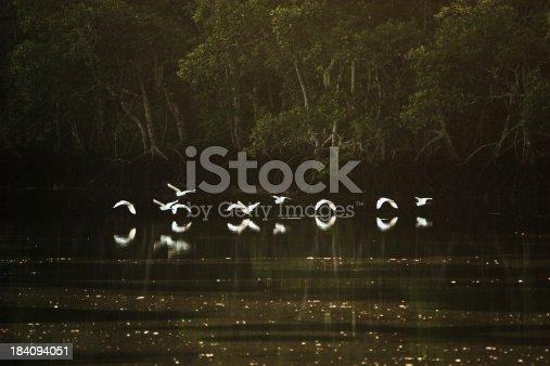 istock Flock of Herons 184094051