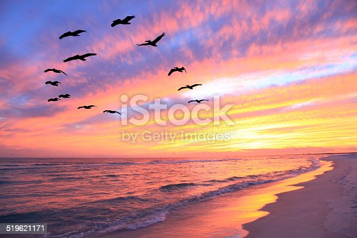Flock of Pelicans Fly Over the Beach at Sunset