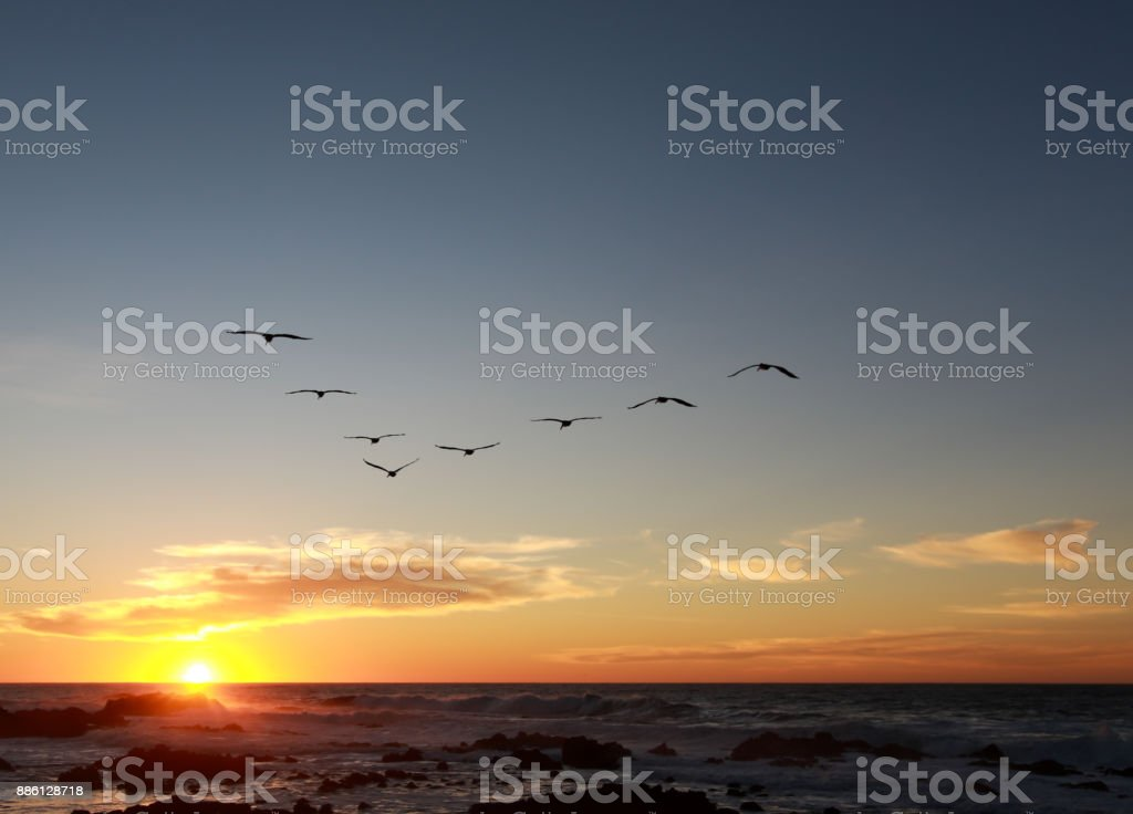 Flock of Pelicans flying in a V-formation into a moody sunset in the Monterey Bay, California. stock photo