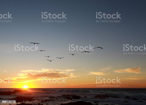 Photo of Flock of Pelicans flying in a V-formation into a moody sunset in the Monterey Bay, California.