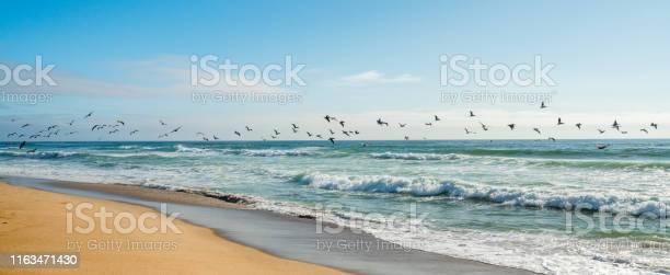 Flock of pelicans flying over the ocean pacific coastline california picture id1163471430?b=1&k=6&m=1163471430&s=612x612&h=izeos 6nezuklttptlezytud tnanwnihefiqc9svby=