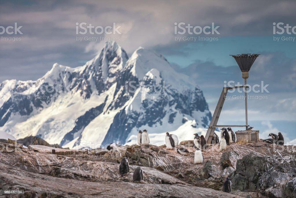 A flock of penguins . Antarctic mountains zbiór zdjęć royalty-free