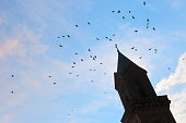 Flock of Pigeons and doves natural pattern - flying around Cathedral tower – Germany