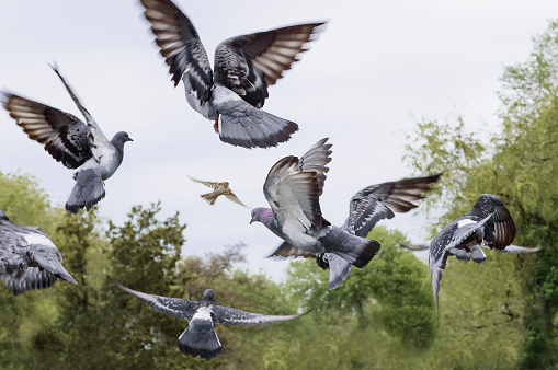 A flock of pigeons flew to the sky.