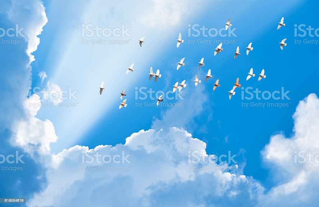 flock of pigeons flying in blue sky among clouds stock photo