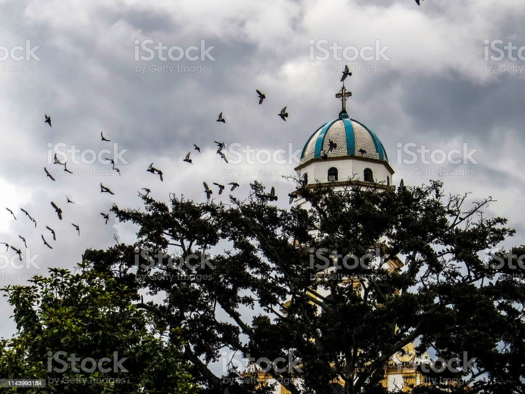 Flock of pigeons flying next to a church and tree