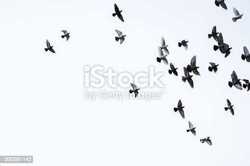 19 739 Black And White Birds Stock Photos Pictures Royalty Free Images Istock