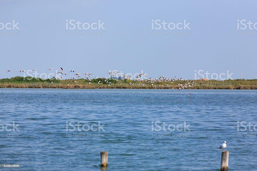 Flock of pink flamingos stock photo