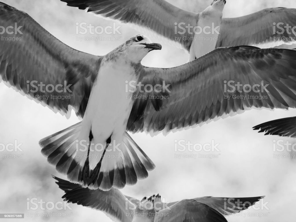 Close-up view of seagulls flying with wings spread against soft...