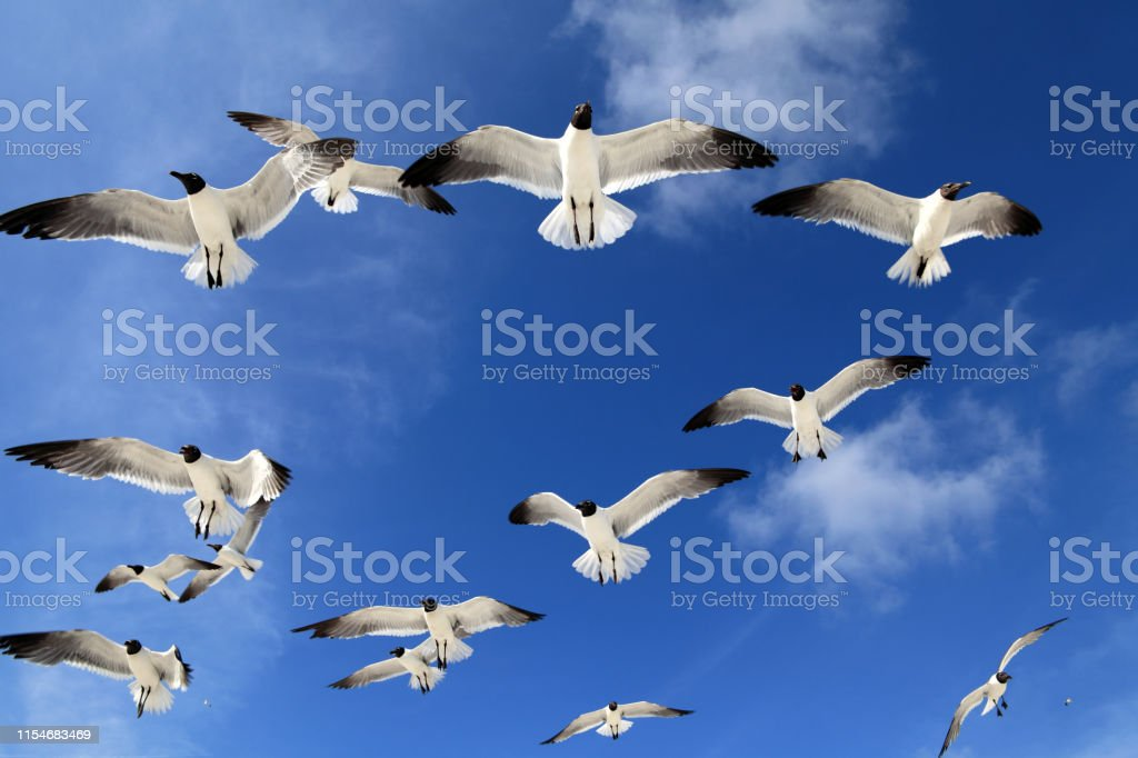 Close up flock of seagulls over blue clear sky