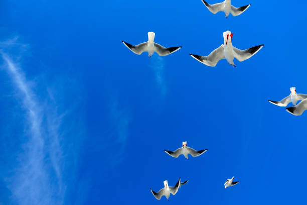flock of seagulls flying over blue sunny sky stock photo