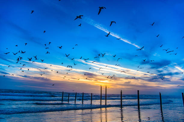 flock of seagulls in daytona beach, florida, usa - daytona 500 stock photos and pictures
