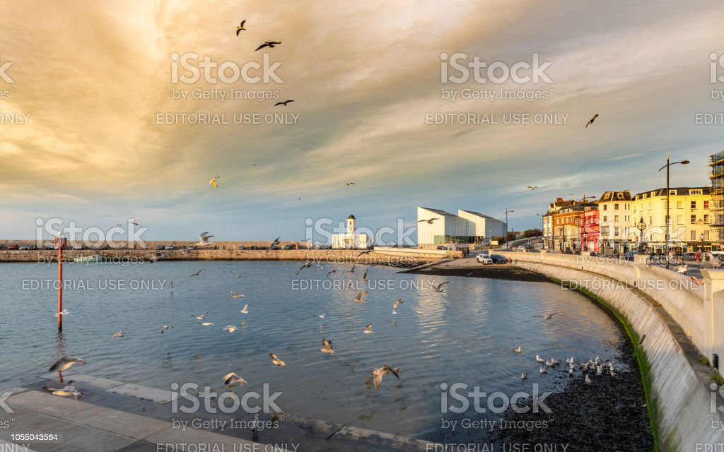 Flock of seagulls in Margate Harbour stock photo