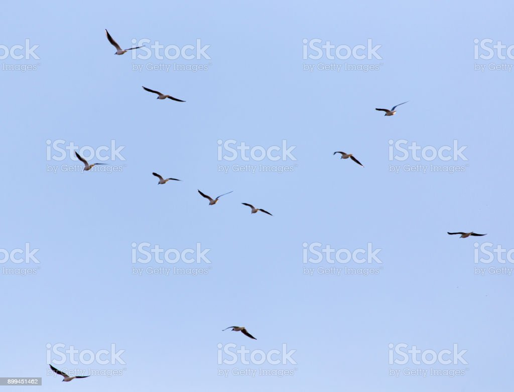 A flock of seagulls in the sky stock photo