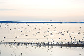 Flock of seagulls on the beach. Selective focus.