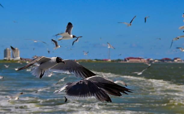 flock von möwen - wilde hilde stock-fotos und bilder