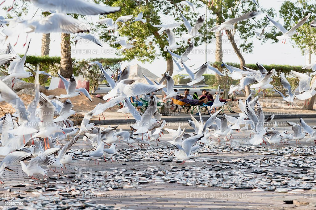 Flock of Seagulls stock photo
