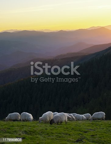 Flock of sheep grazing at sunset in the Aiako Harriak Natural Park