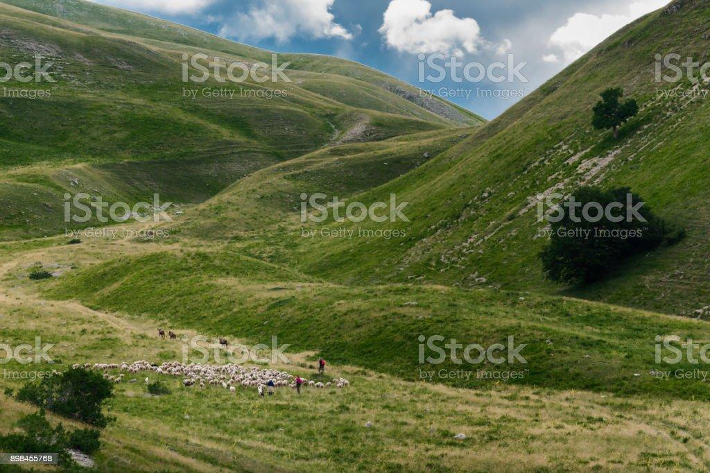 Rebaño de ovejas en las espectaculares montañas de Abruzzo, Italia - foto de stock