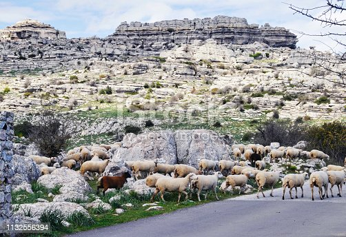 istock Flock of sheep in El Torcal Nature Reserve, Andalusia,Spain 1132556394