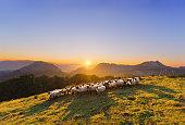istock flock of sheep in Saibi mountain 481365844