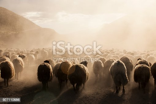 istock A flock of sheep 927110686