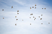 A flock of small birds on the background of the sky