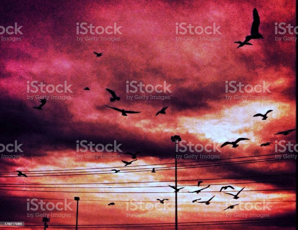 Flock of the Lines royalty-free stock photo