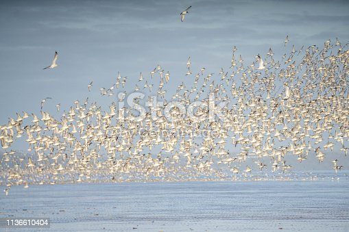 flock of wading birds on beach