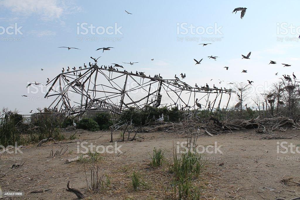 Flock of waterbirds gathering on fallen metal structure stock photo
