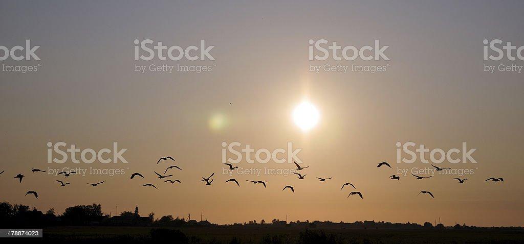 Flock дикой птицы в небе стоковое фото