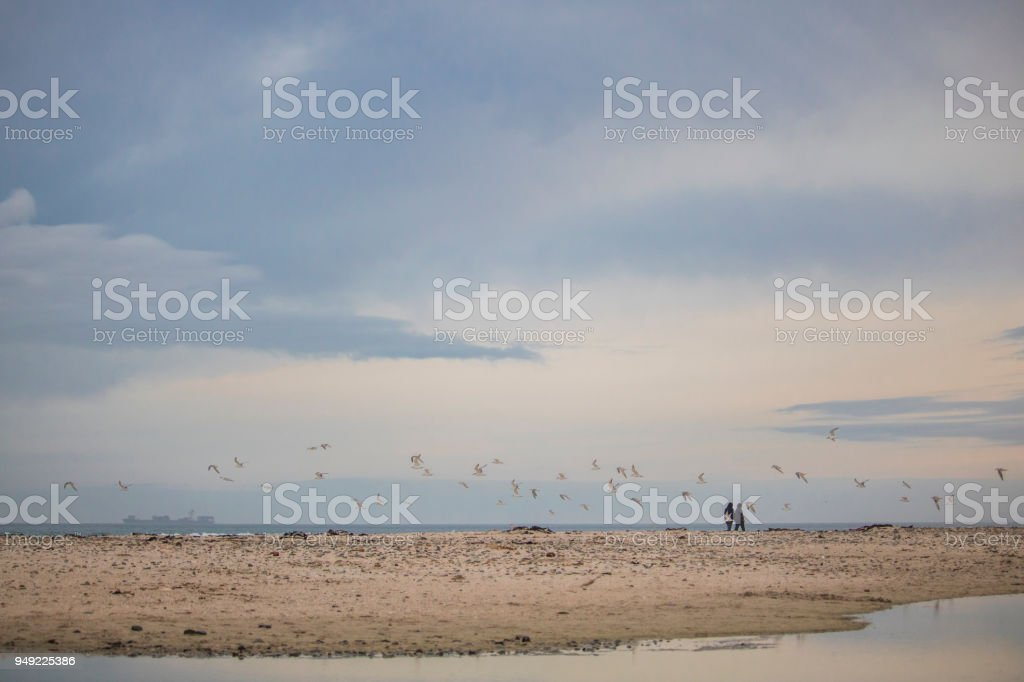 Flock on birds in mid flight with a couple walking on Paarden Eiland Beach at sunrise. stock photo