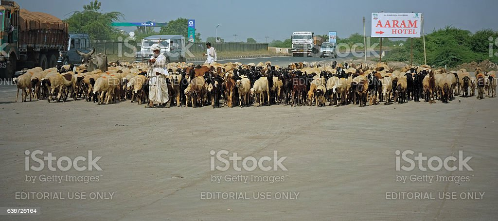 Flock on the move in Gujarat stock photo
