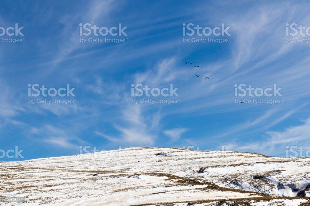 Flock Over Bokong Snowy Peaks stock photo